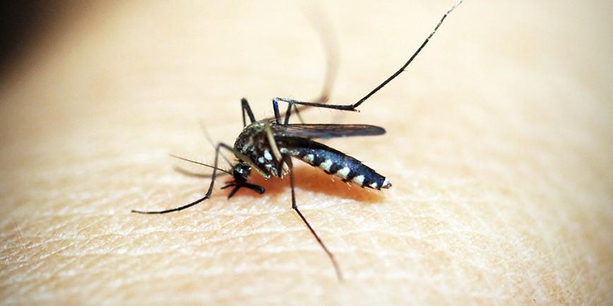 Fakten und legenden über das verjagen von mücken: was hilft wirklich?